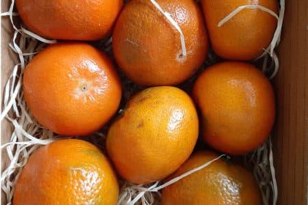 Livraison corbeille fruit entreprise