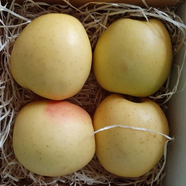 alvéole pomme livraison fruits en entreprise