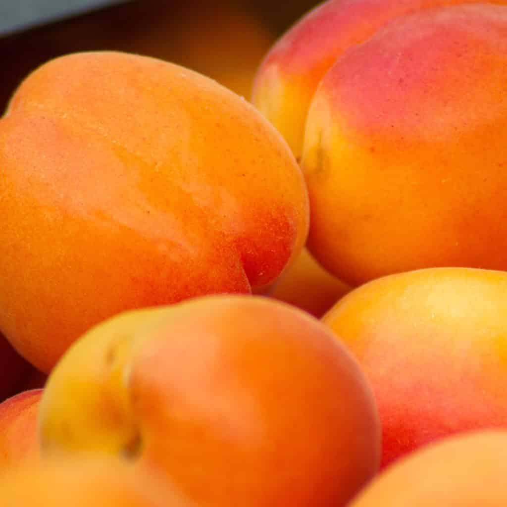 Abricot-carré