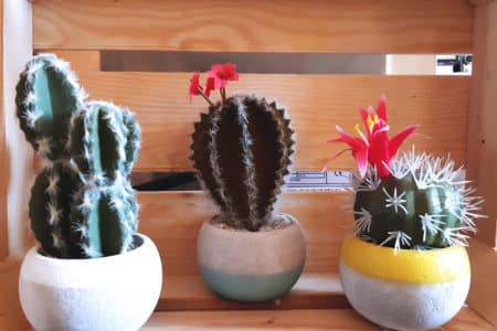 cactus déco tacos juju's animations