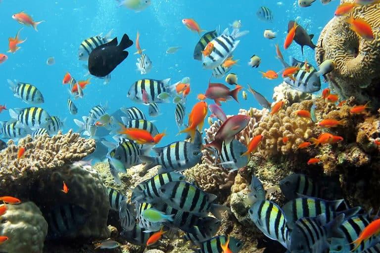 Protection des océans Semaine Européenne du Développement Durable